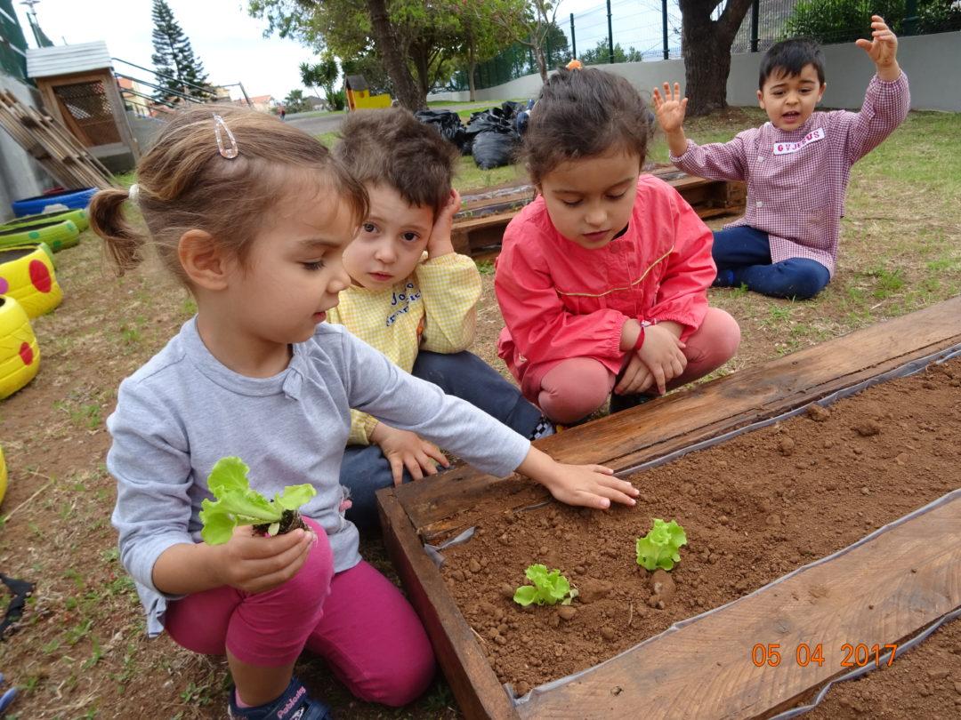Horta biológica no Infantário