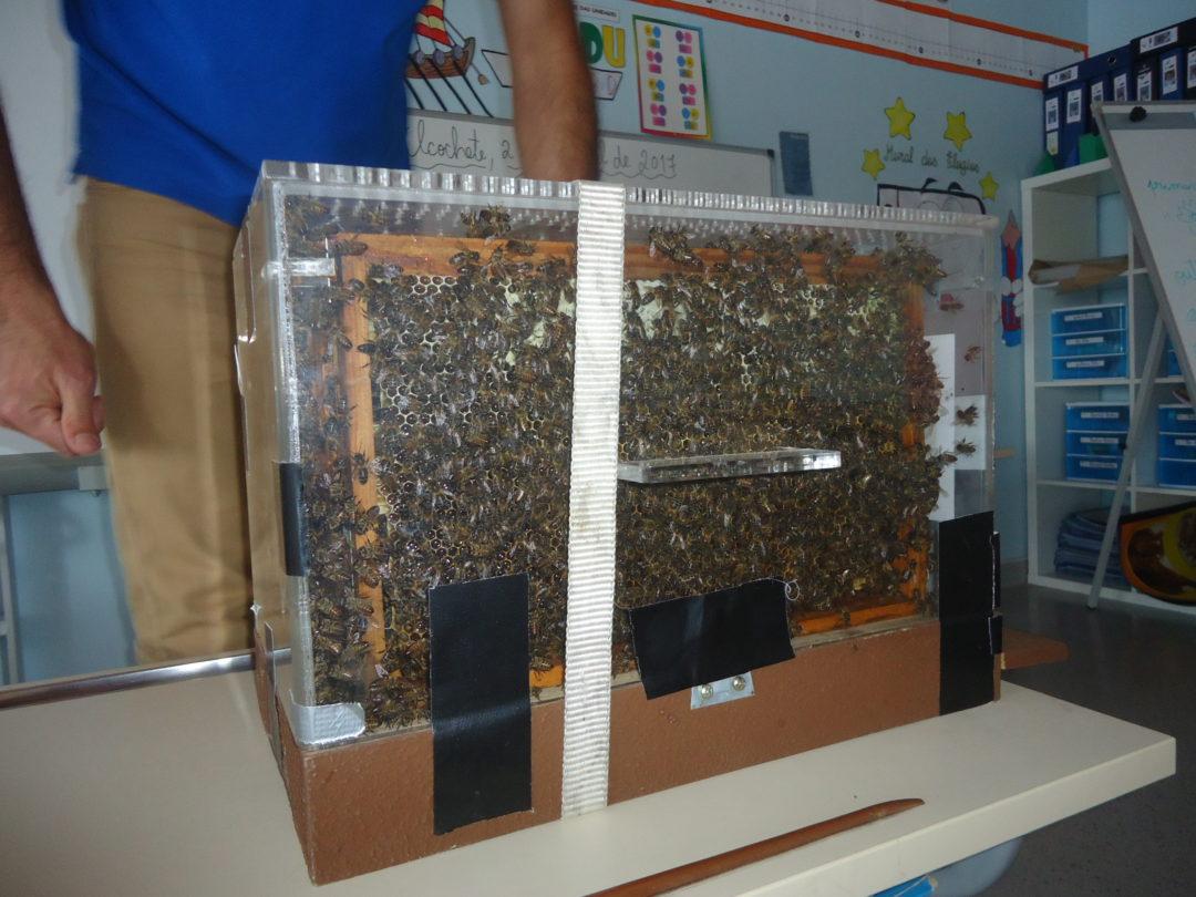 Workshop apicultura