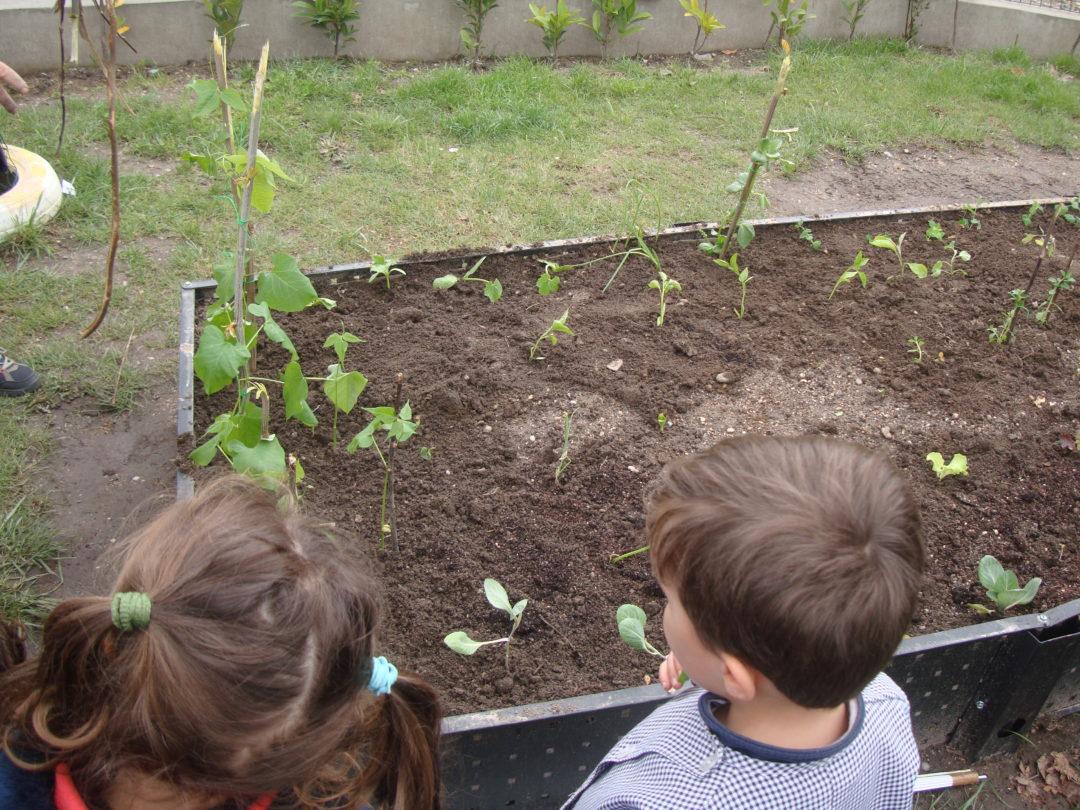 Criação de uma Horta Pedagógica