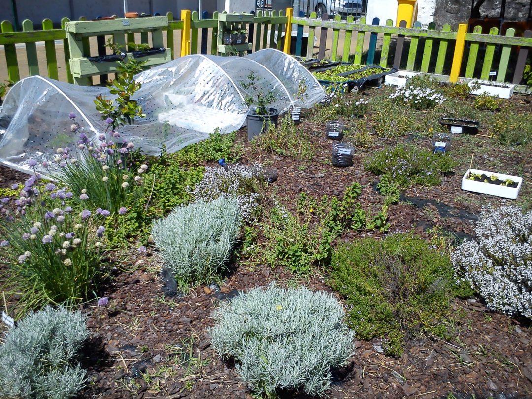 Plantações na escola