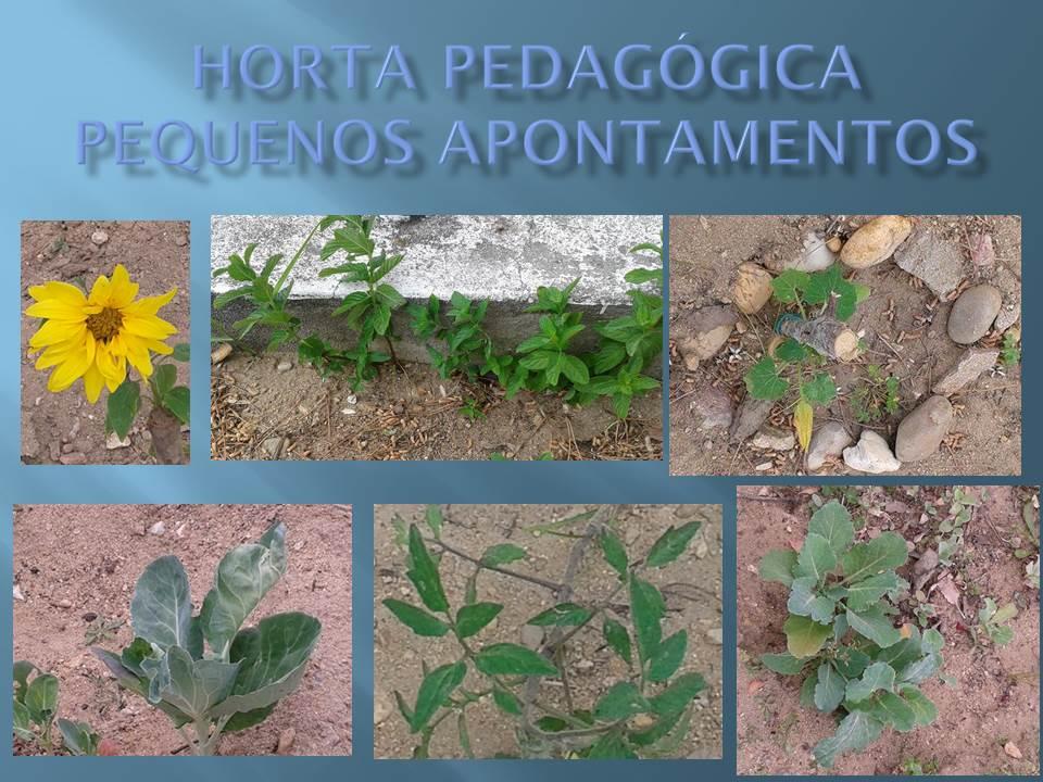 Pequenos apontamentos na Horta pedagógica da Escola B 2,3/S da Chamusca
