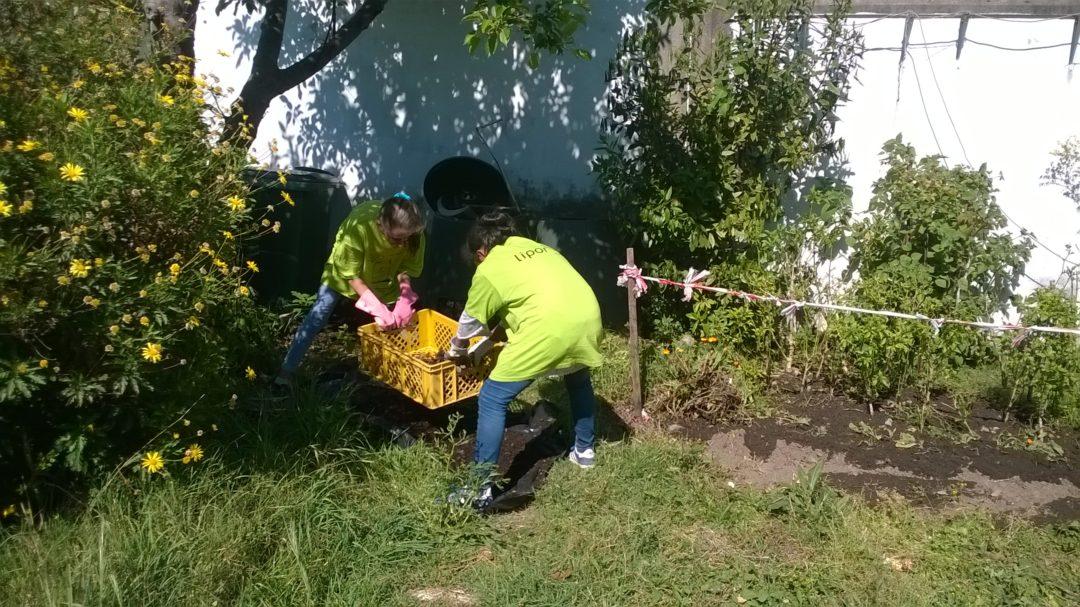 Cuidar da horta biológica