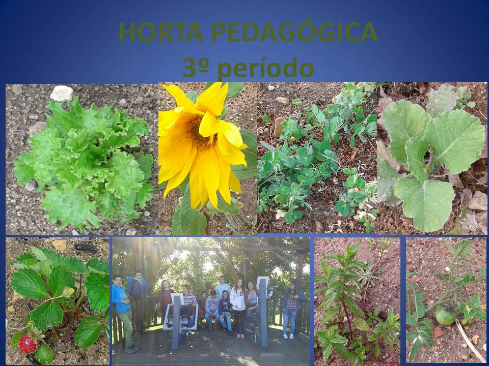 Horta Pedagógica da Escola B. 2,3/ S da Chamusca