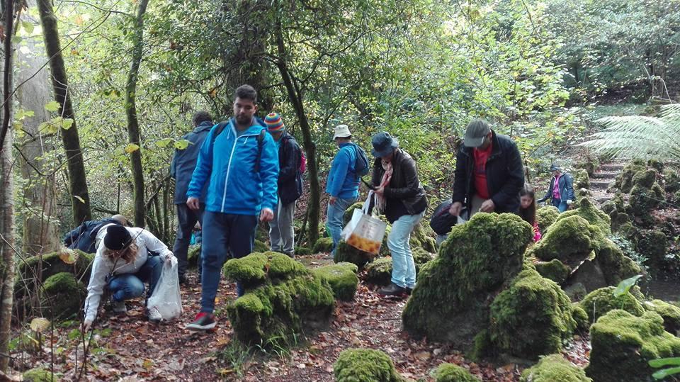"""""""Floresta Relíquia"""" do Bussaco doa sementes às áreas ardidas"""