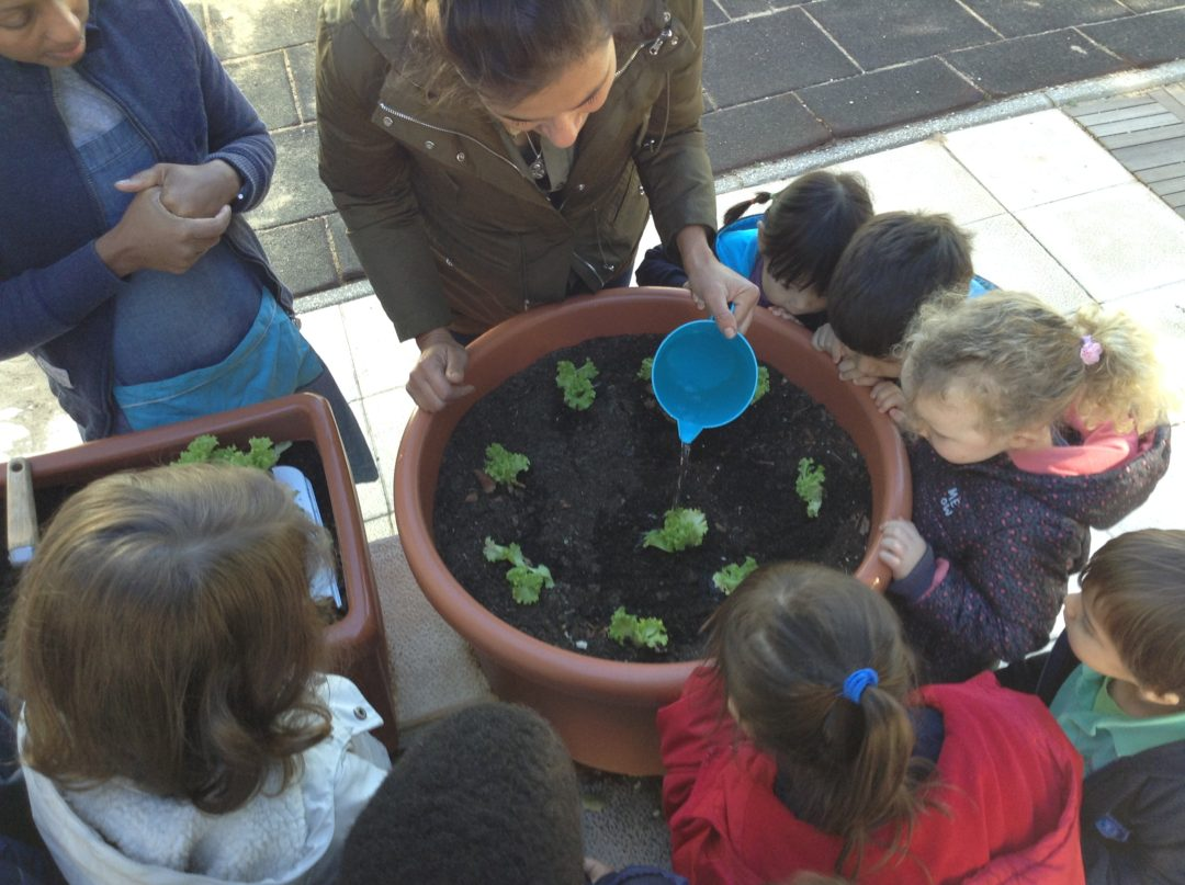 Plantação de legumes na horta do Jardim de Infância da Beloura