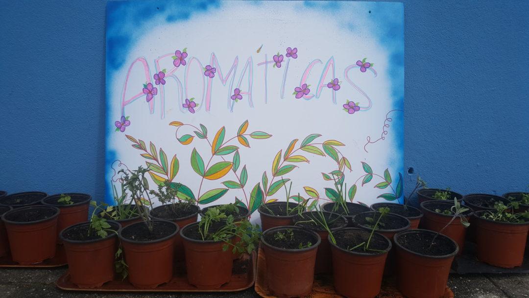 Jardim de Ervas Aromáticas