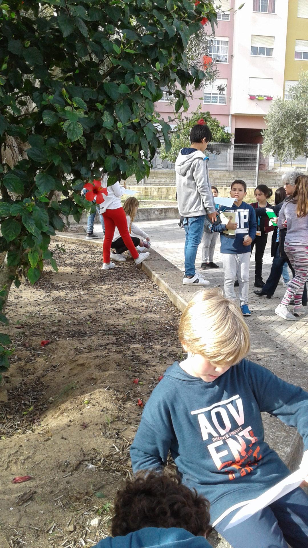 As árvores da nossa Escola