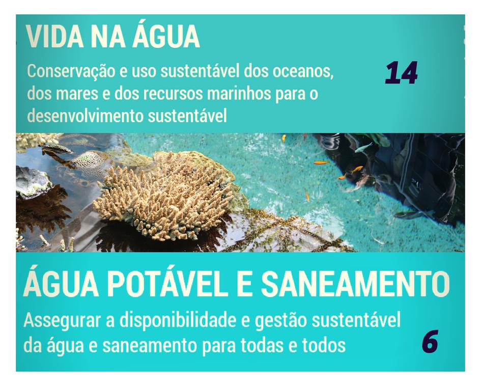 ODS Milénio – No Water No Life