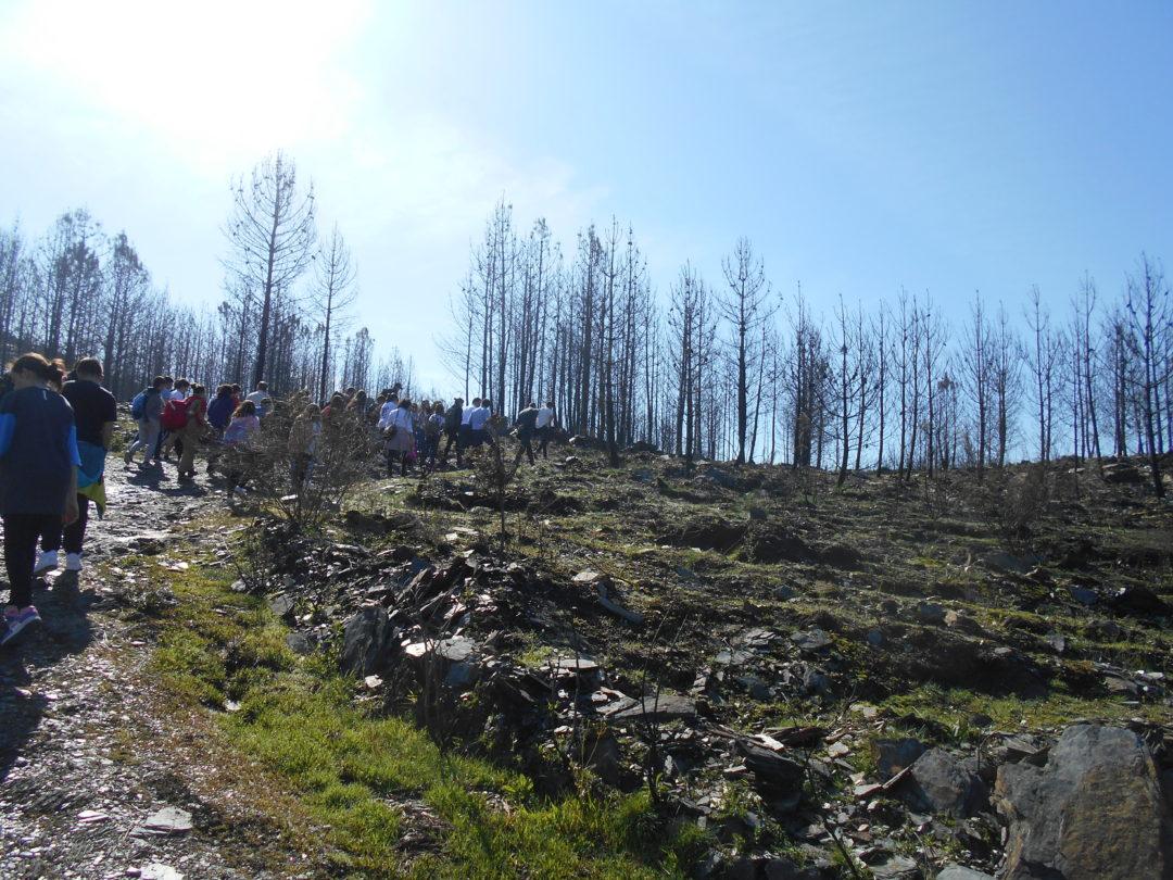 Plantação de átvores em área ardida