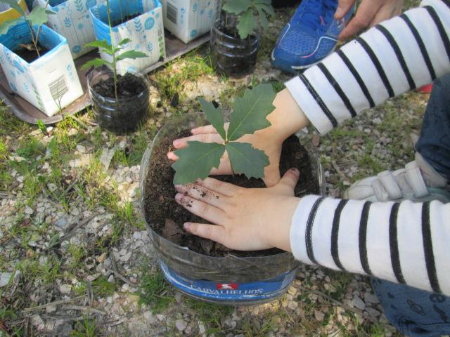 Maternidade de árvores  /  Brigada da Floresta do JI de Casais de S. Clemente / GAD