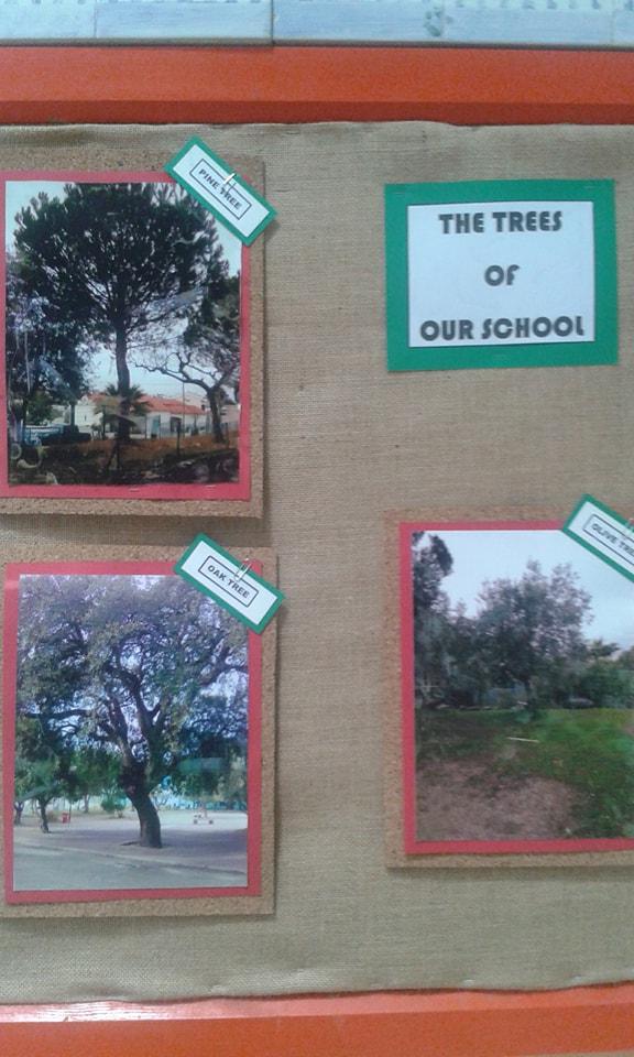 As árvores autóctones da nossa Escola em exposição.