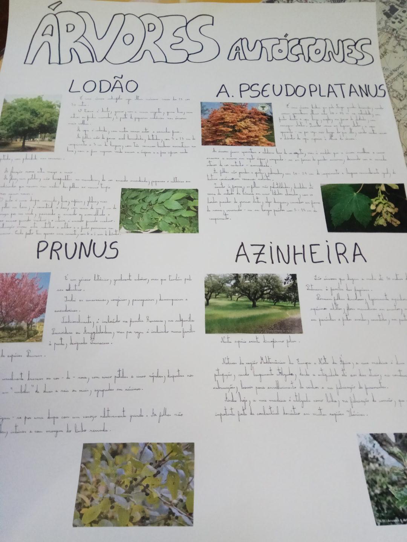 Concurso Cartaz Árvores Autóctones