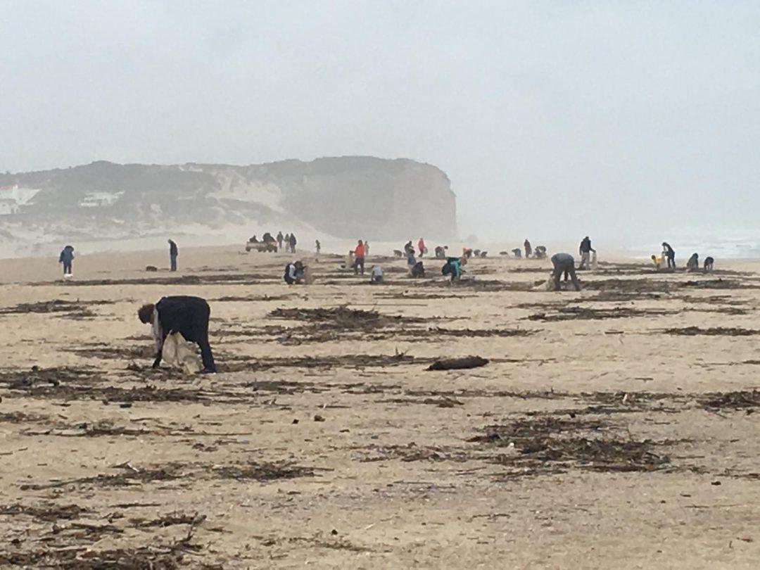 Limpeza da Praia da Foz do Arelho