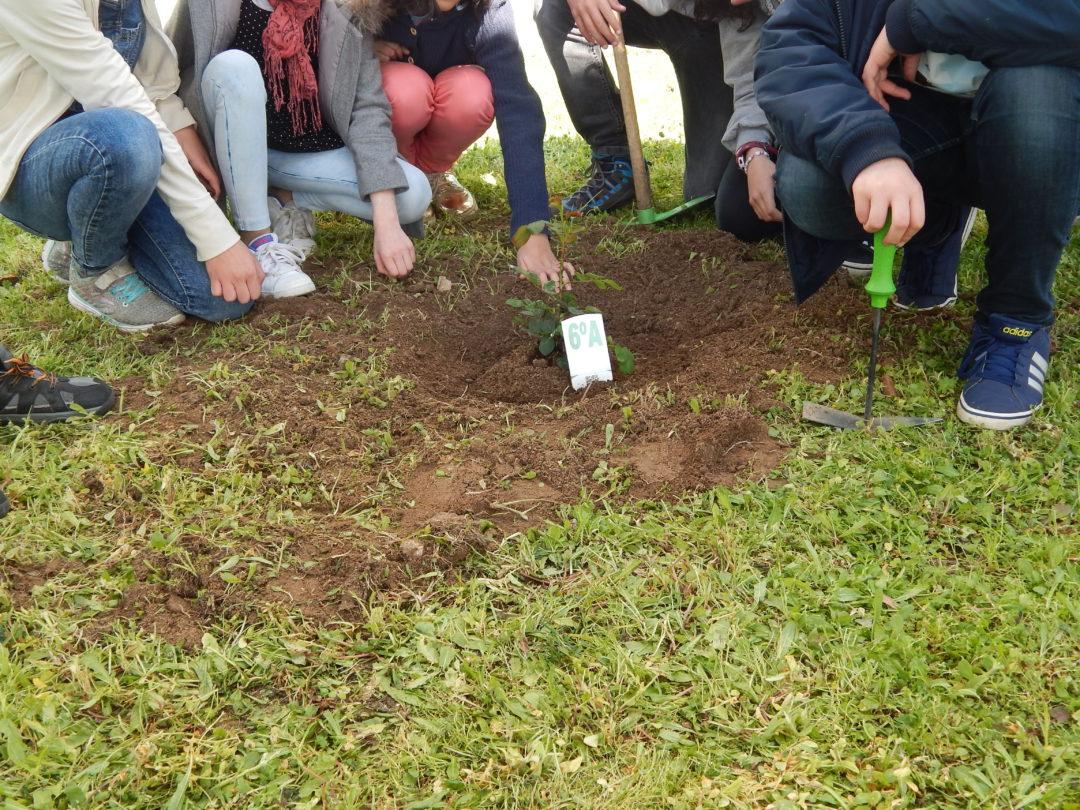 Comemoração do Dia Mundial da Árvore