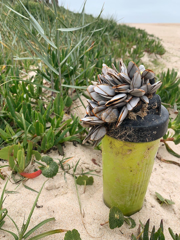 Em defesa da biodiversidade marinha
