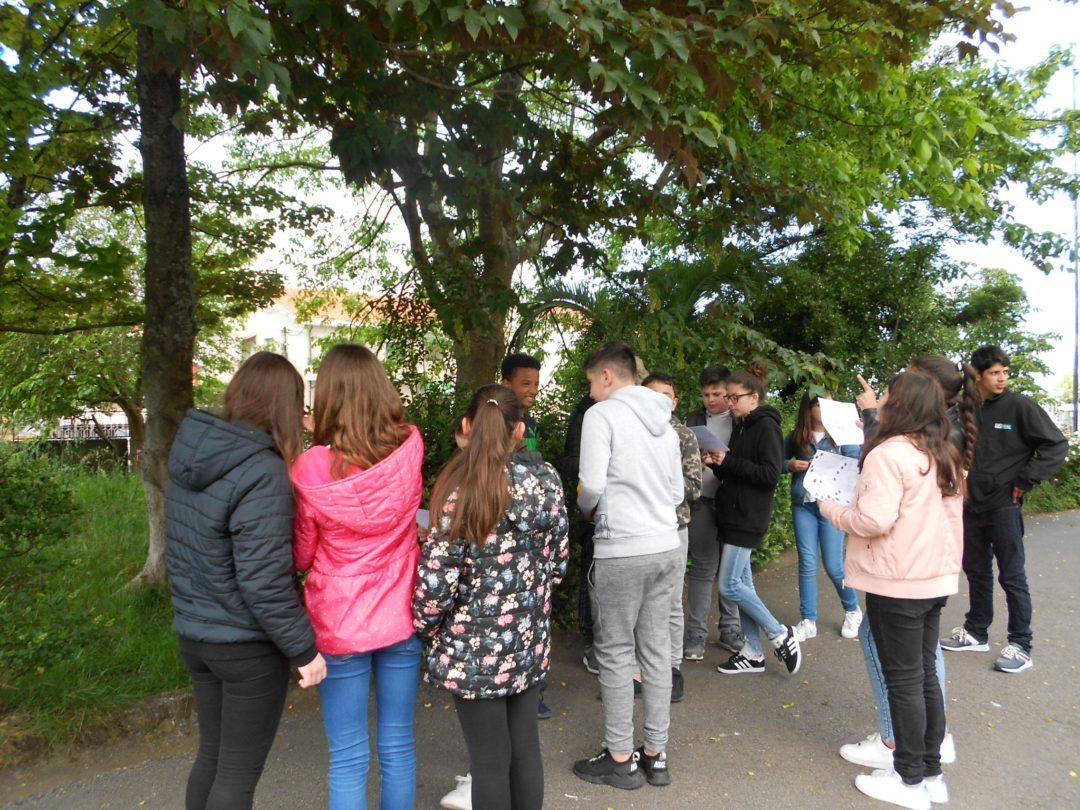 Comemoração do Dia da Terra – Identificação das árvores da minha Escola