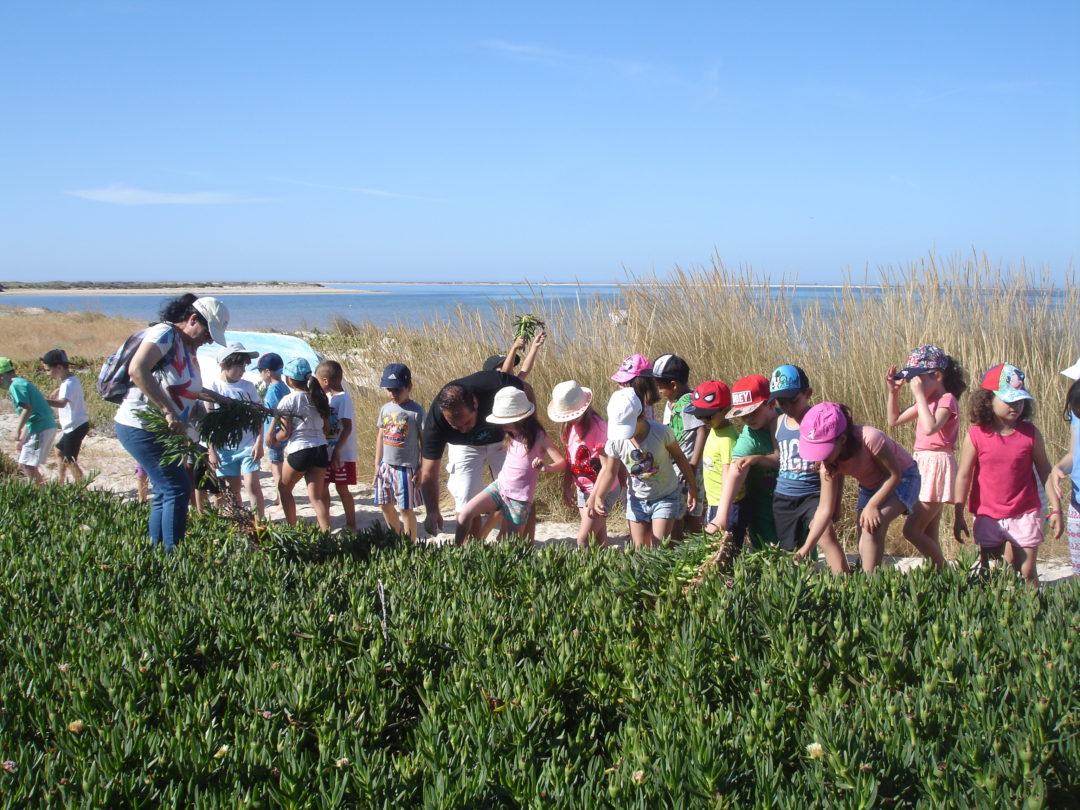 Remoção de plantas invasoras na Ilha da Armona (chorões-das-praias).
