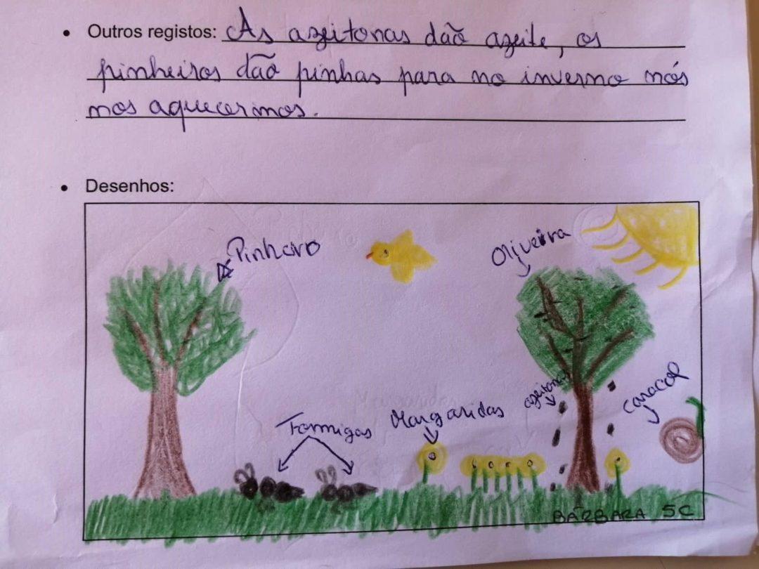 Caracterização de habitats e biodiversidade na Escola Básica e Secundária da Chamusca