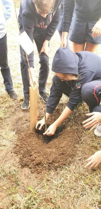 Plantação de floresta autóctone